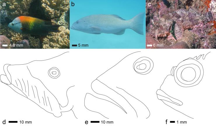 Figure 1 three fishies2